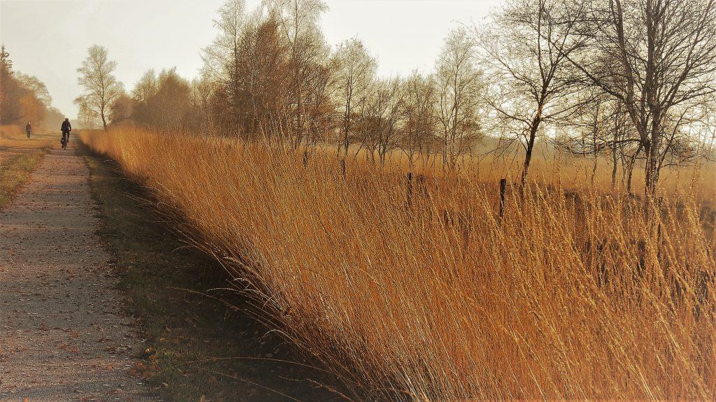 Herfst in Bargerveen